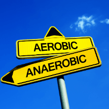 aerobic vs anaerobic - long distance running - feature