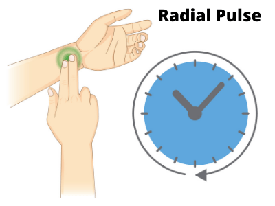 Rockport-Walk-Test-How-To-Take-Radial-Pulse